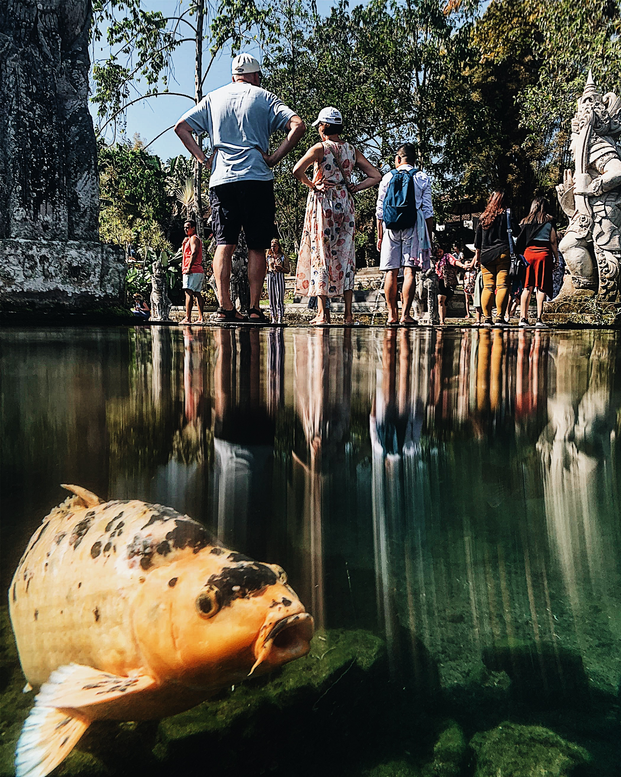 Mass tourism in Bali, behind the scenes of temples and other tourist places. Photo people and fish